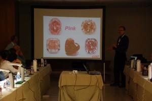 Branko talking on Pink Diamonds at workshop Valencia 2016